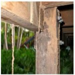 Termite Control-Termites Eating a Post